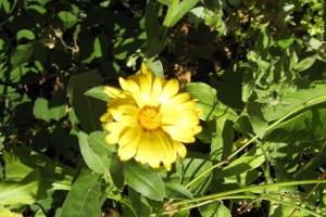 Gelbe Blume mit Grün
