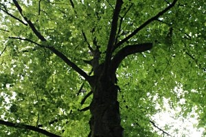 Rundweg der sprechenden Bäume in Bremervörde