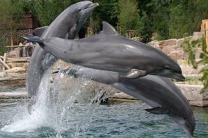 Delphinlagune (c) Tiergarten Nürnberg
