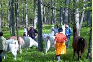 Kindergeburtstag bei der Karawanserei Llamera in Usingen (c)  Llamera in Usingen