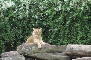 Zoo Karlsruhe (c) alex grom