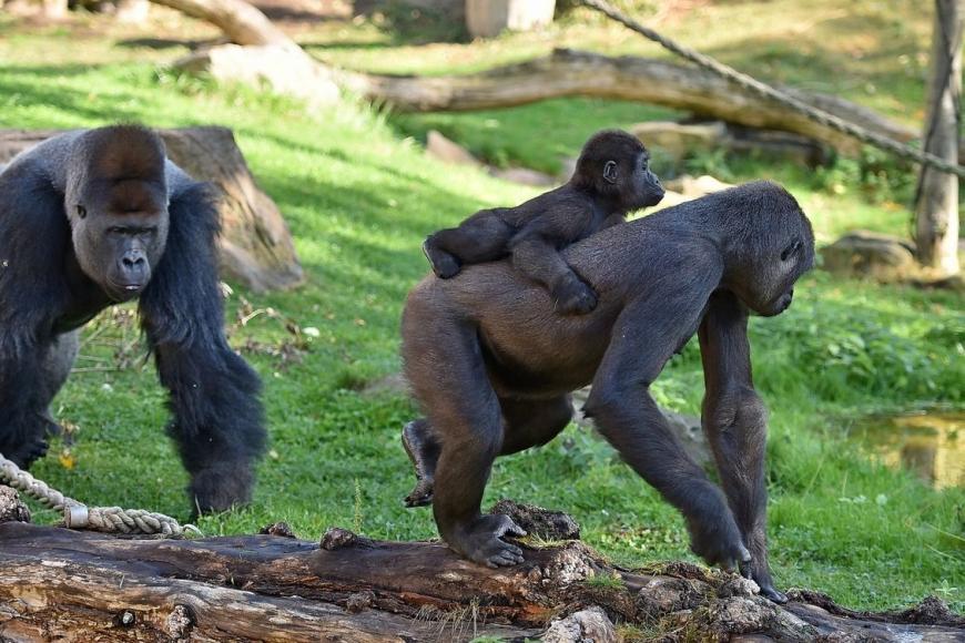 Krefelder Zoo