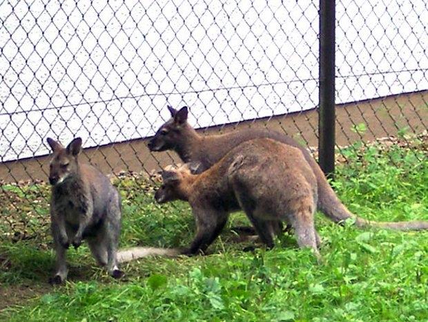 Tierische Erlebnisse (c) Tierpark Herford