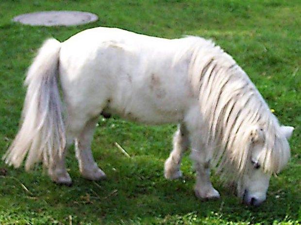 Ponys im Tierpark (c) Tierpark Herford