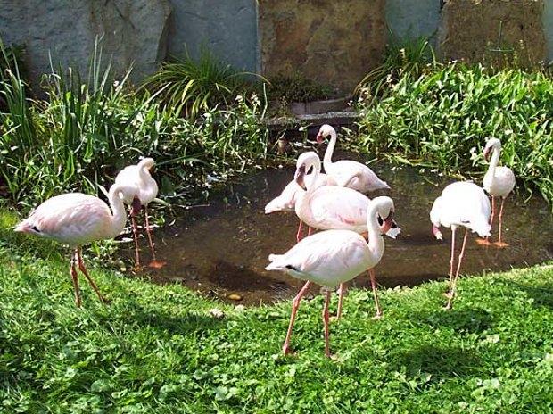 Flamingos im Tierpark (c) Tierpark Herford