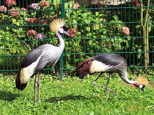 Tierparkerlebnisse (c) Tierpark Herford