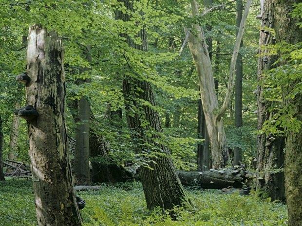 Nationalpark Hainich