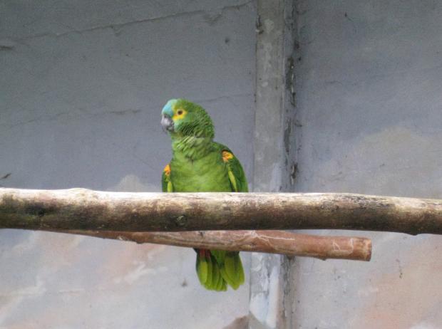 Papagei im Tierpark Walldorf