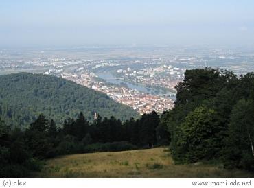 Tinnunculus Heidelberg