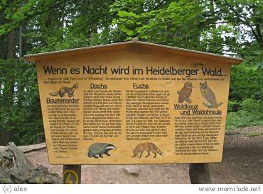 Heidelberg Königstuhl Walderlebnispfad