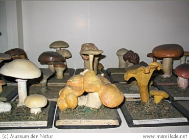 Museum der Natur Gotha s01