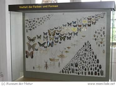 Museum der Natur Gotha s05
