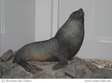 Museum der Natur Gotha s06