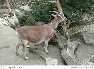 Tierpark Thale