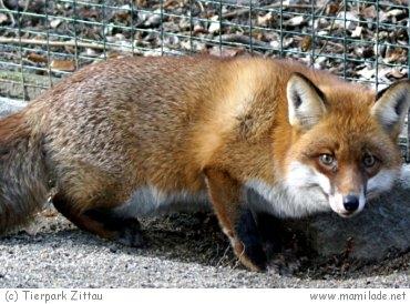 Tierpark Zittau s01