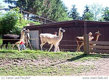 Lama- und Ponyhof in Langenbernsdorf