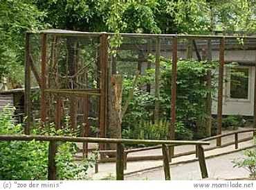 """""""Zoo der Minis"""" oder auch Tiergarten Aue"""