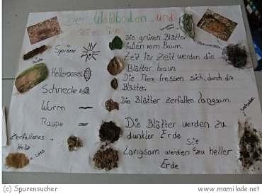 """""""Spurensucher"""" - die Naturerlebnisschule in Königstein"""
