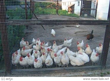 Familienfarm Lübars