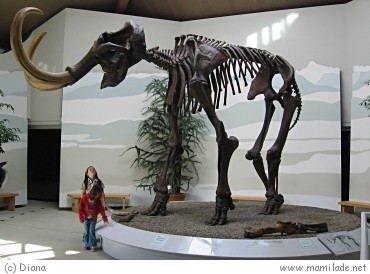 Mammutmuseum Siegsdorf