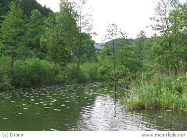 Höglwörtersee