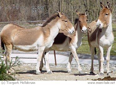 Tierpark Hellabrunn München