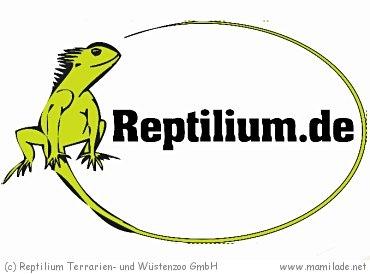 Reptilium Landau
