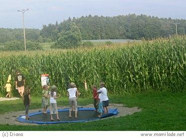 Maislabyrinth Kressbronn