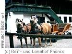 Kutschenfahrt auf dem Lamahof Phönix