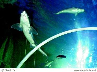 Sea Life Timmendorf