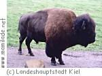 Tiergehege Hasseldieksdamm in Kiel