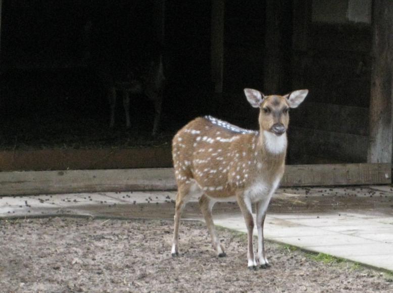 Reh im Tierpark Walldorf