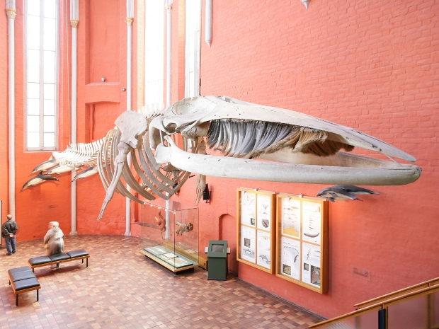 Deutsches Meeresmuseum Stralsund