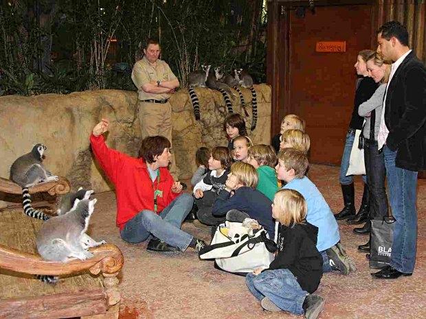 Katta beim Kindergeburtstag im Tierpark Hagenbeck in Hamburg