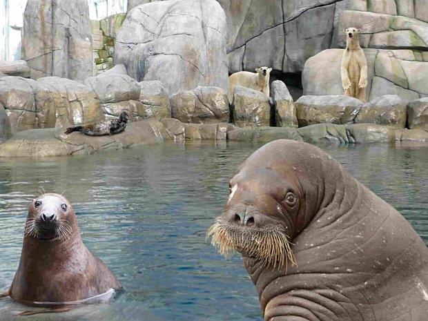 Besuch im Eismeer beim Kindergeburtstag im Tierpark Hagenbeck in Hamburg