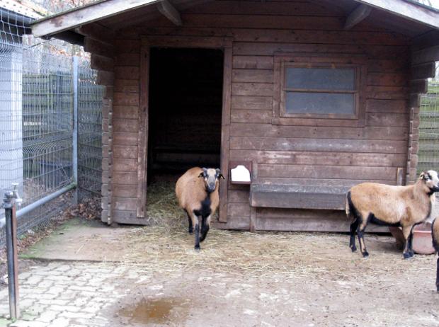 Ziegen im Tierpark Walldorf