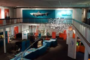 """Einblick in die Sonderausstellung """"Mensch, Fisch!"""" (c) Landesmuseum Natur und Mensch, Foto W. Kehmeier"""
