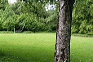 Kurpark in Bad Nauheim (c) Adriana