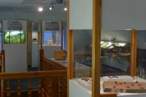 (c) Bernsteinmuseum St. Peter-Ording