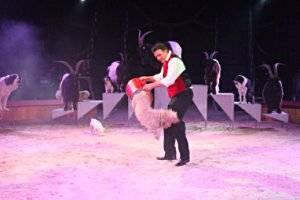 (c) Circus Carl Busch