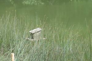 Flußufer (c) alex grom