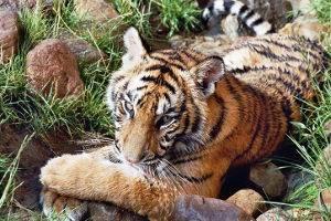 © Erlebnis- und Tigerpark Dassow