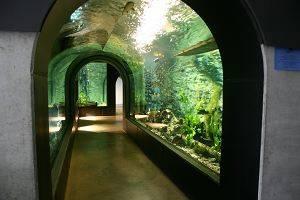Donauaquarium (c) Tiergarten Ulm Friedrichsau