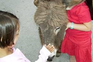 Eseltrekking - Familienwanderung im Wardtwald