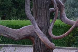 Exotenwald (c) alex grom