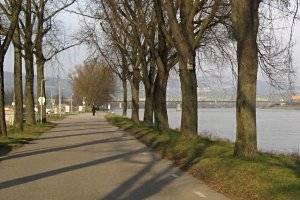 Wanderung auf dem Mainuferweg Frankfurt (c) Adriana