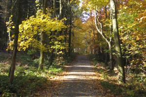 Herbstwald (c) alex grom