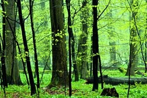 Naturpfad Thiemsburg (c)Nationalpark Hainich