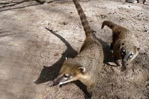 (c) Tierpark in Herford