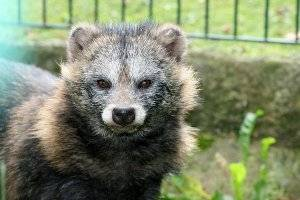 Tiere im Tierpark näher kennenlernen (c) Tierpark Hirschfeld